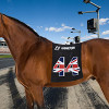 Thumbnail image for Formula One grid girls to be replaced with grid horses
