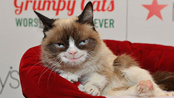 Grumpy Cat now happy cat
